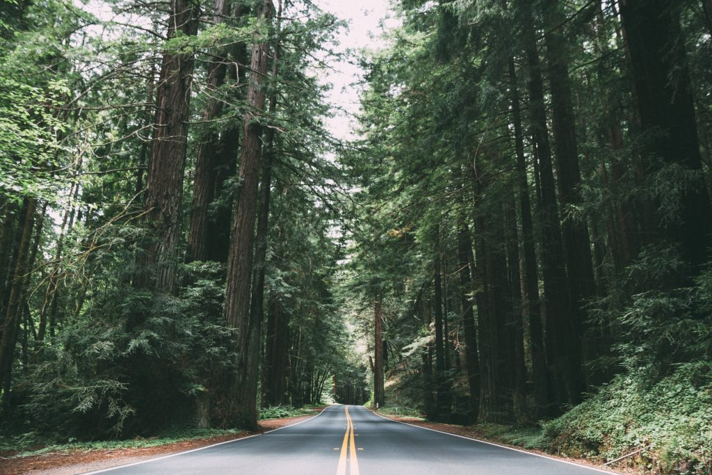 Things To Do In Redwood City