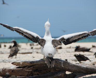 Bird Sanctuaries in Kerala