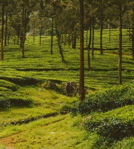 Kerala in May