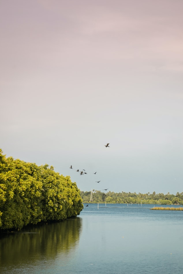 lake of Kerala in May