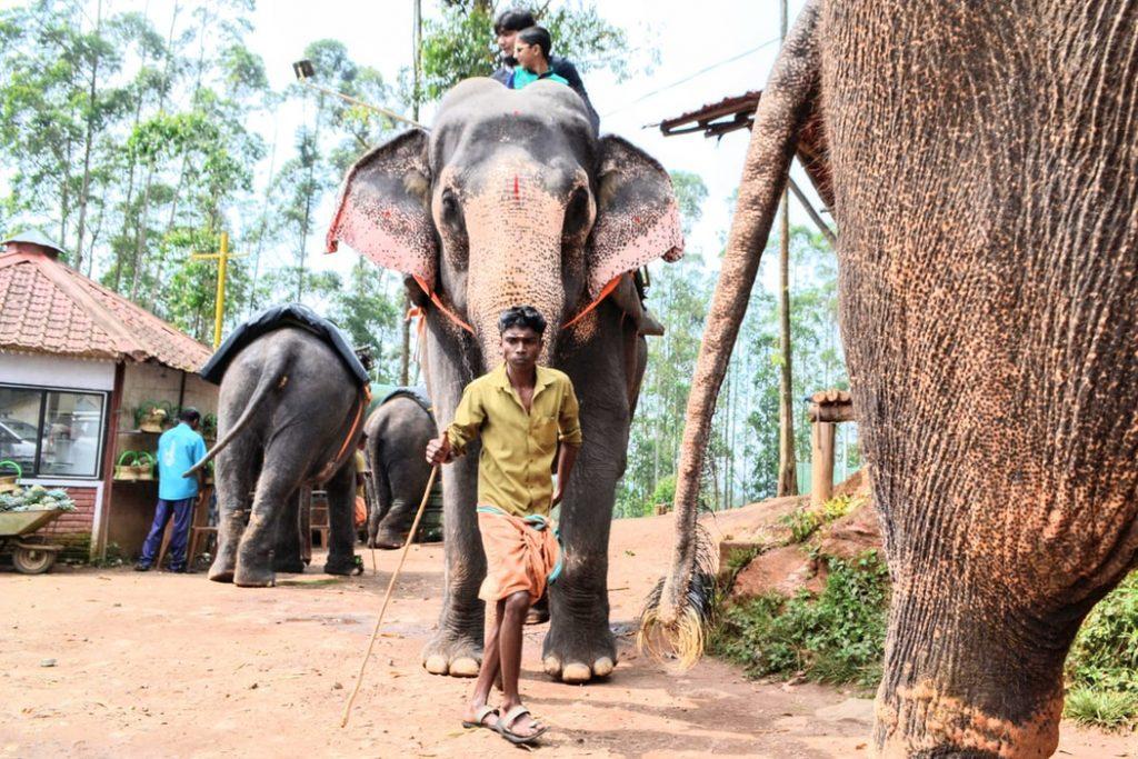 Elephant rallying
