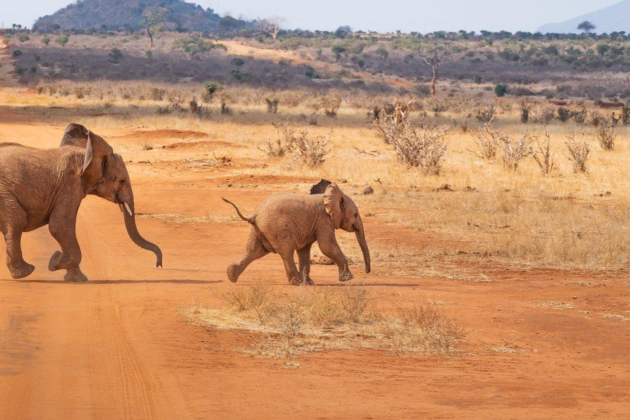 5 Best Safari Tours in Kenya