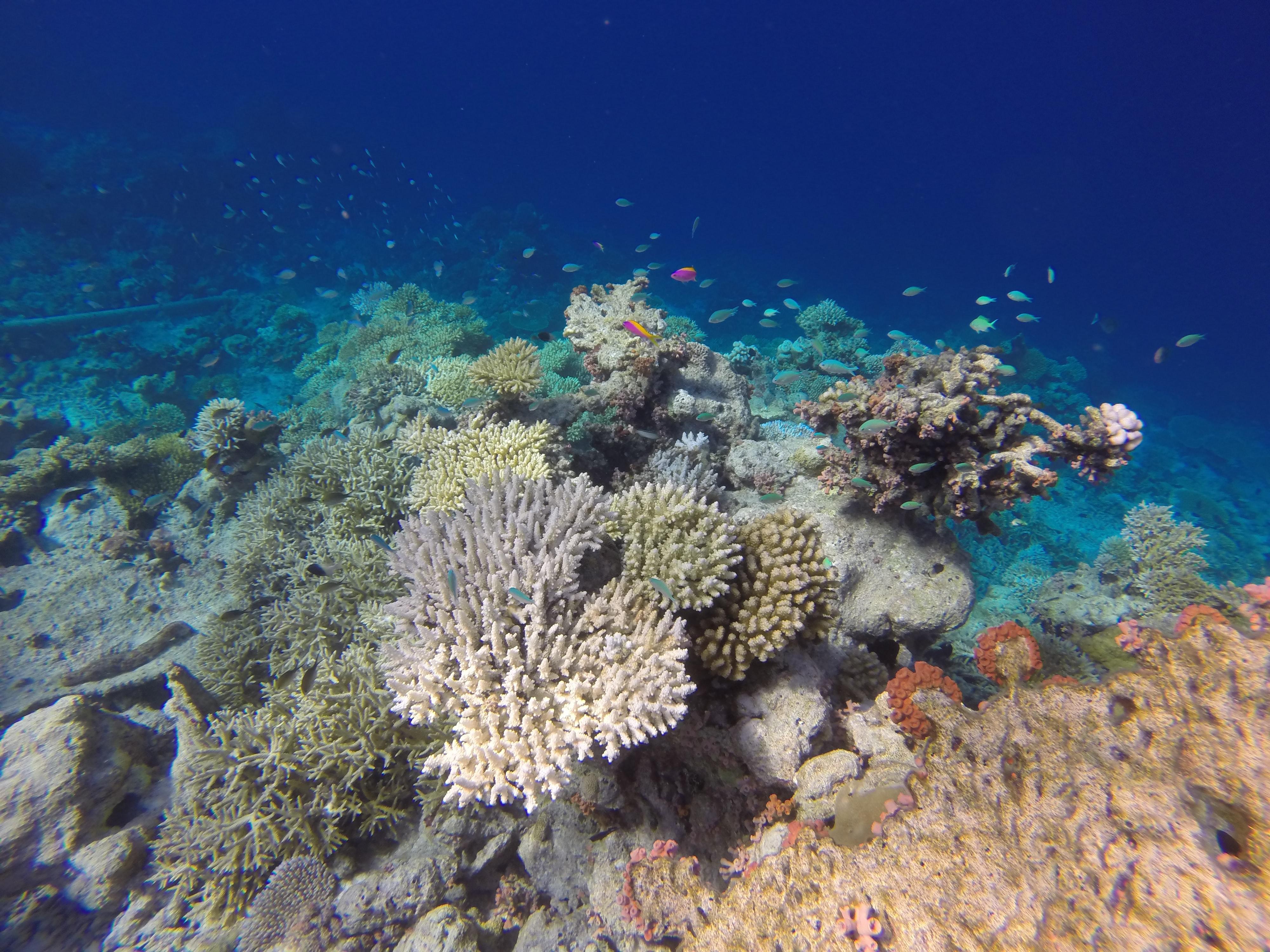 Colorful corals of the Maldives