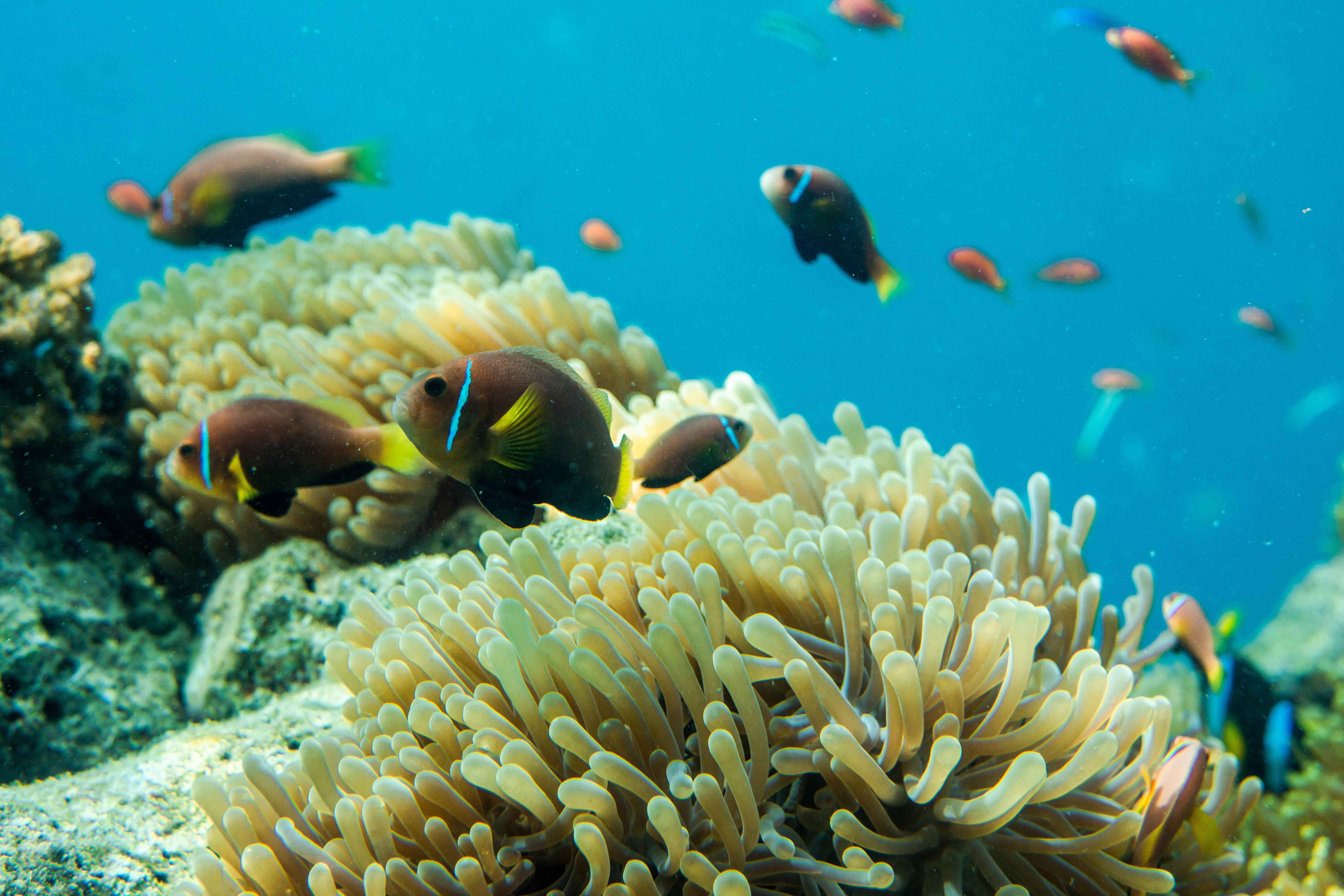 Coral reefs in Anantara Kihavah Maldives Villas