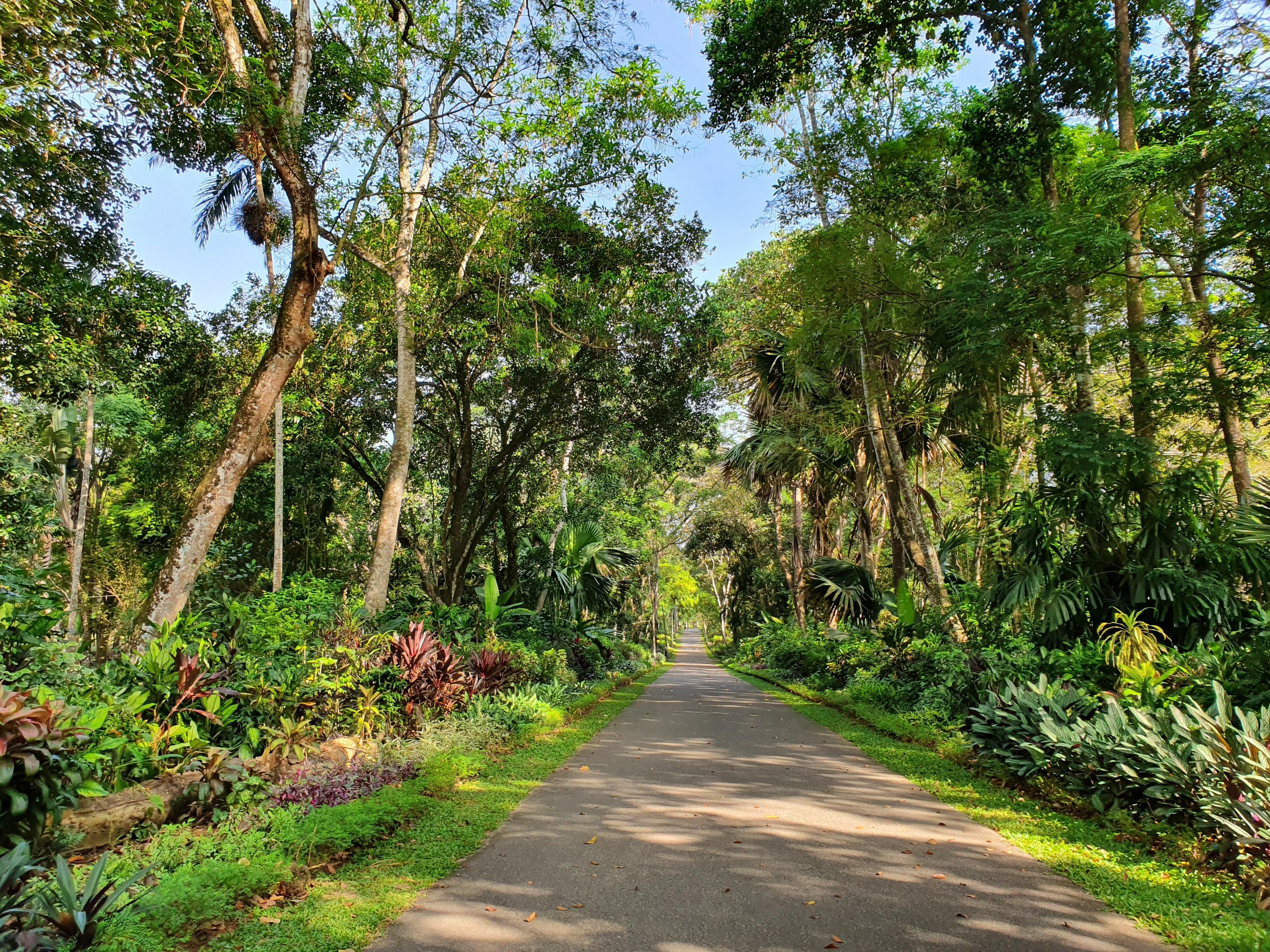 Garden in Sri Lanka