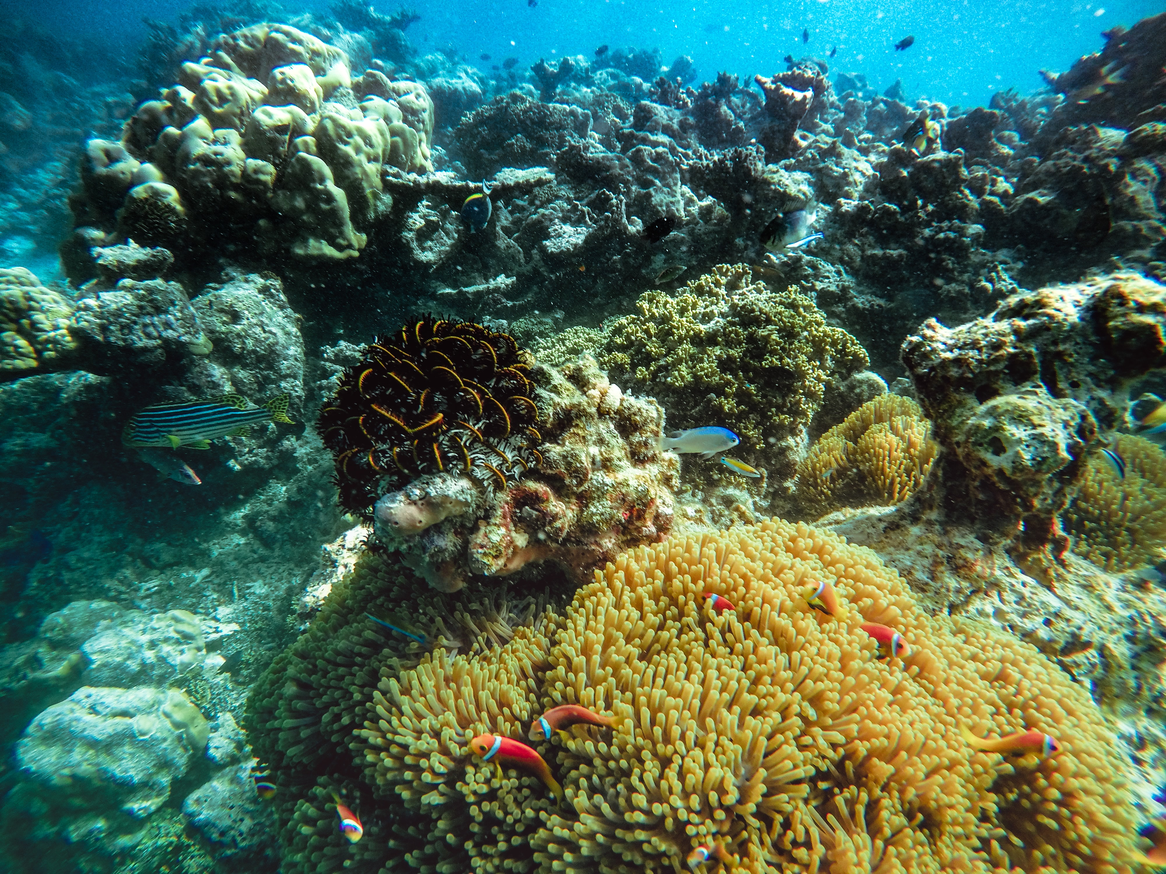 Coral reefs in the Maldives