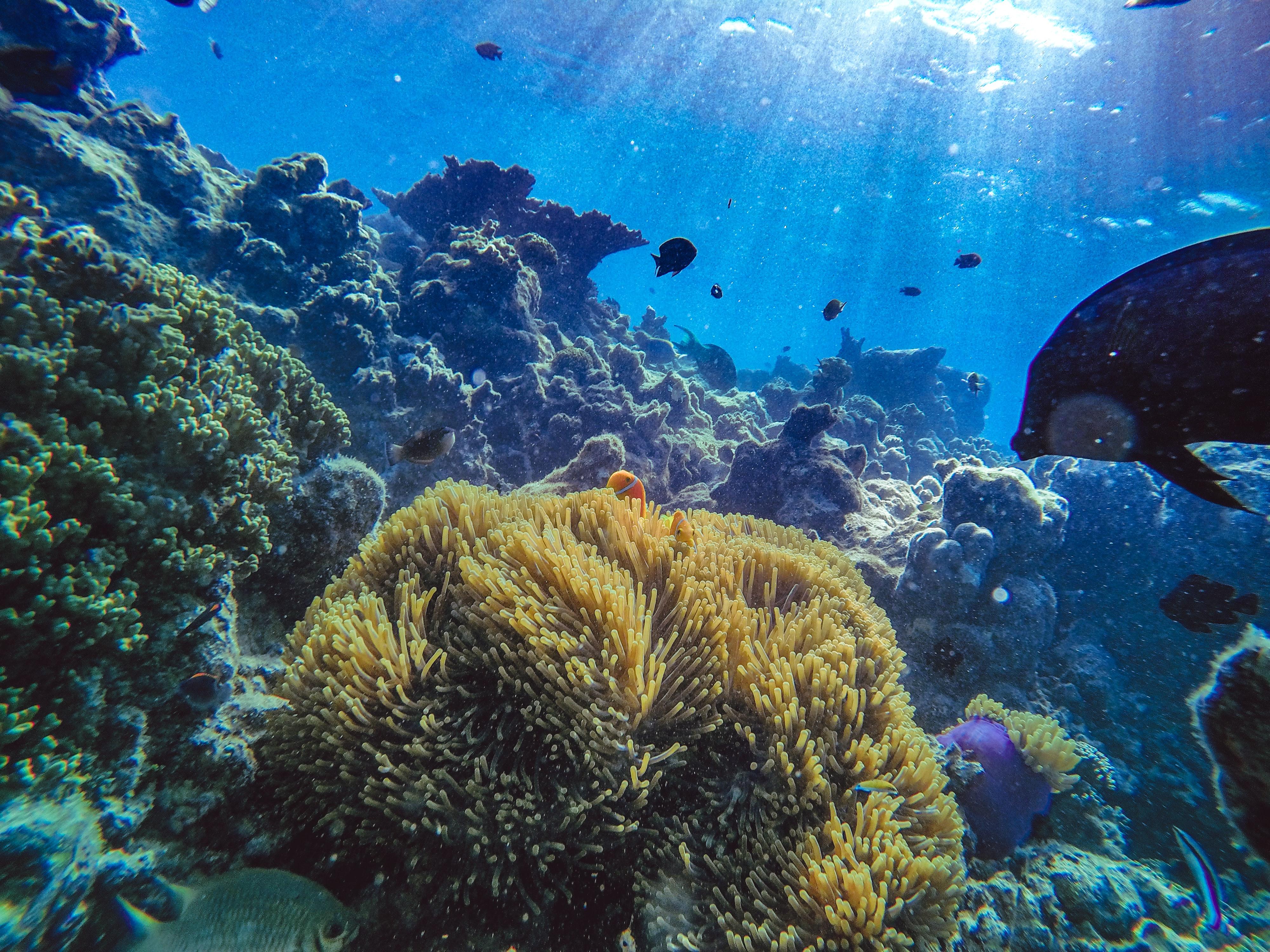 Corals in the Maldives