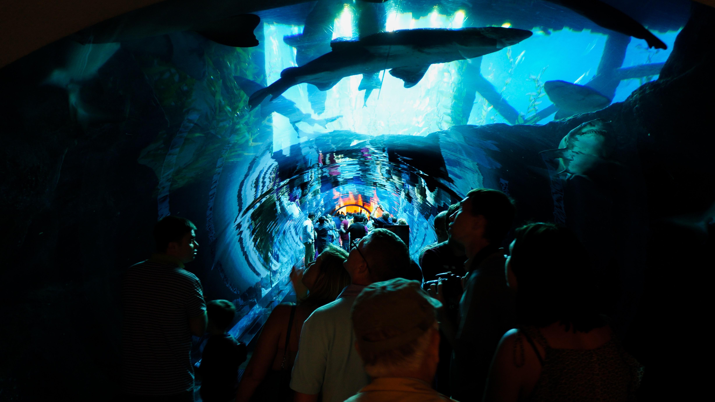 Dubai Aquarium and Underwater Zoo, Dubai vs Qatar