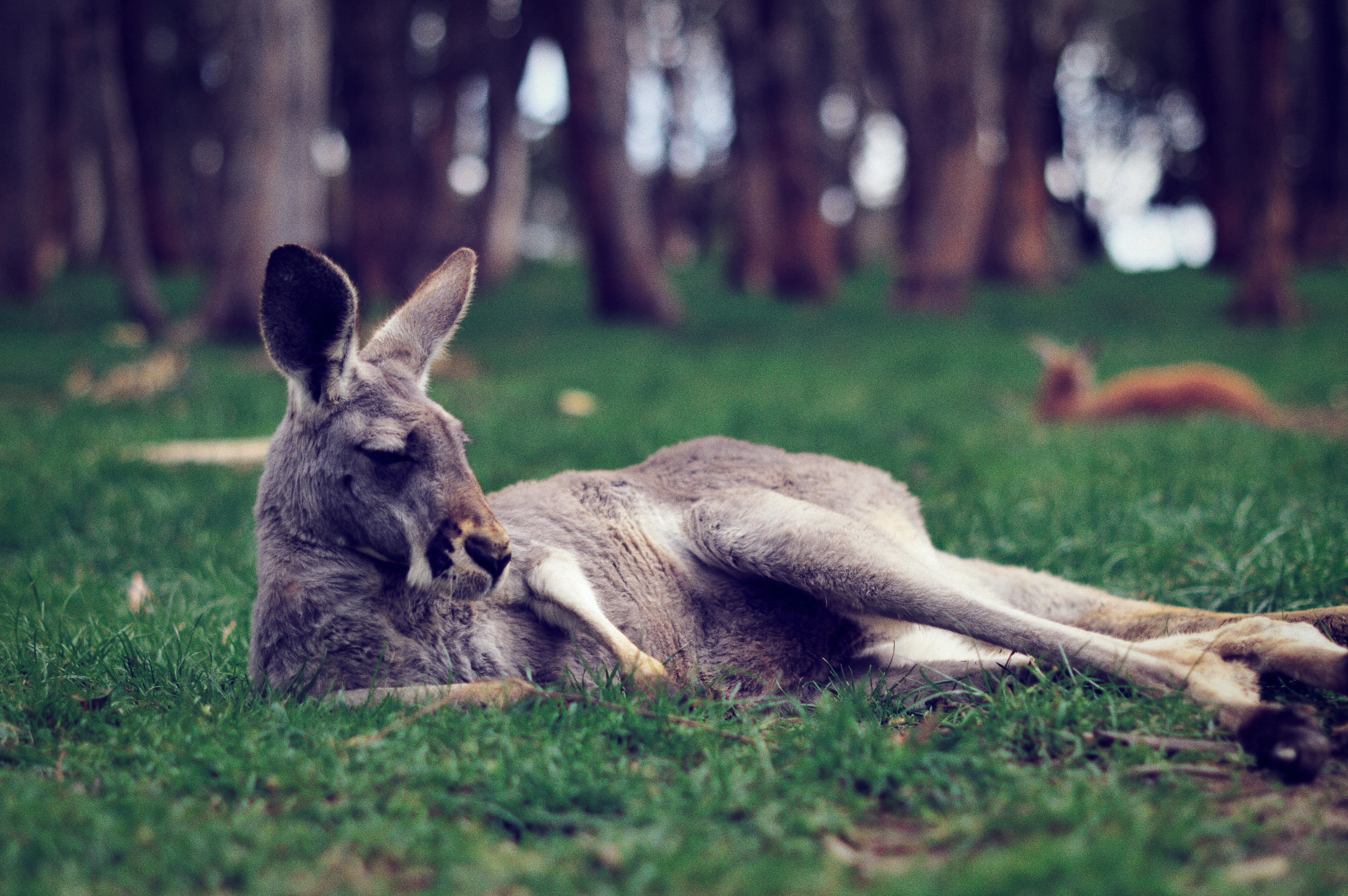 Cleland Conservation Park, Things to see in Adelaide