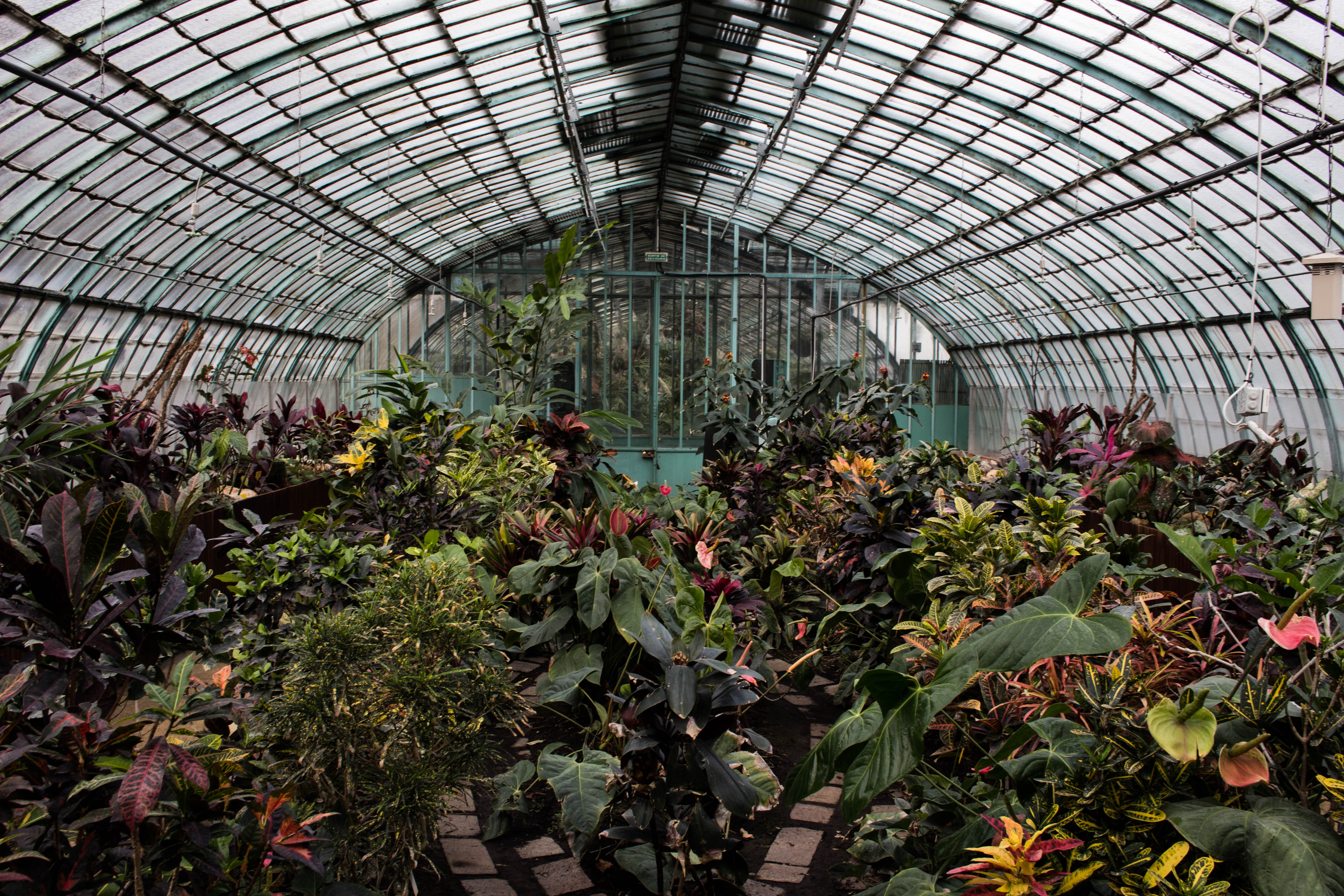 Jardins et Serres d'Auteuil Greenhouse in Paris, France, Things to do in Paris in Winter