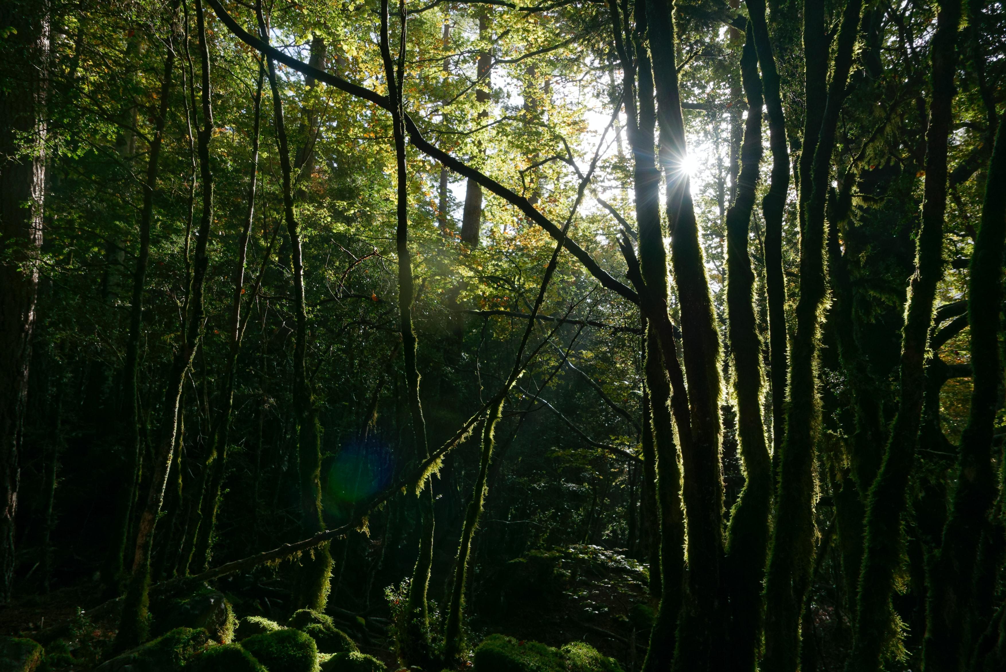 Ordesa Monte Perdido National Park, Spain, National Parks to Visit in Europe