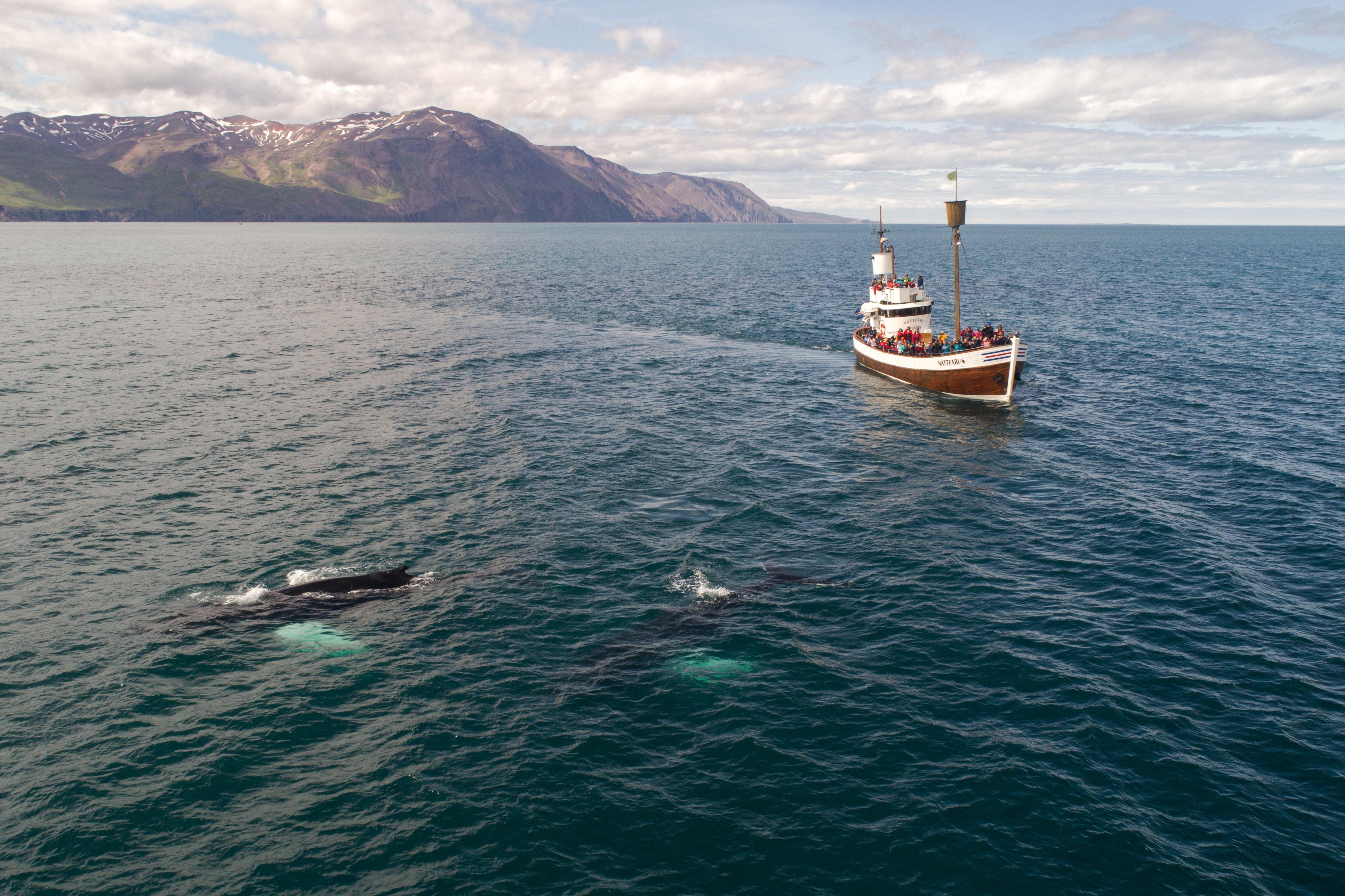 Katla whale watching Things to do in Reykjavik
