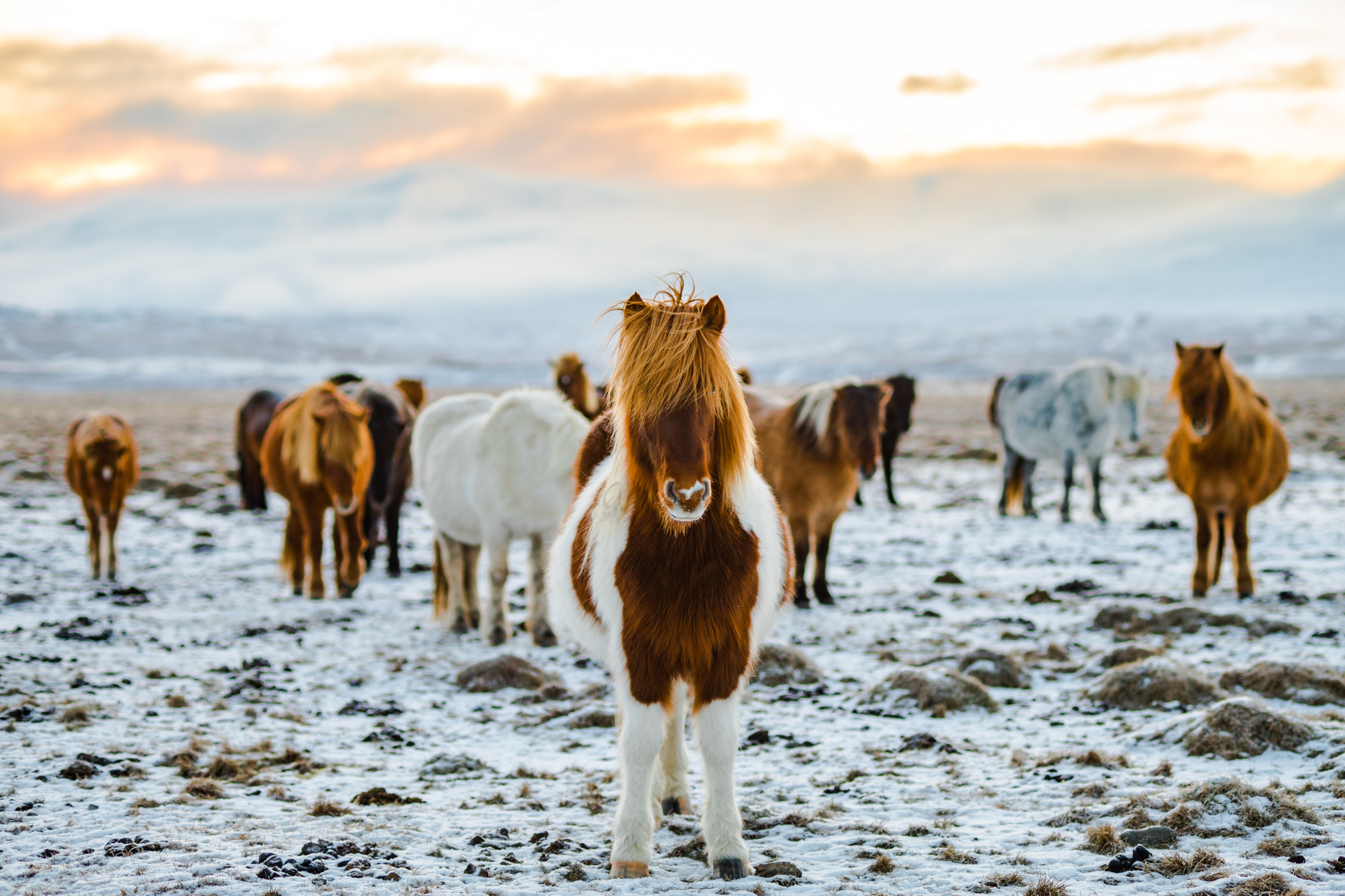Horseriding, Iceland in Winter