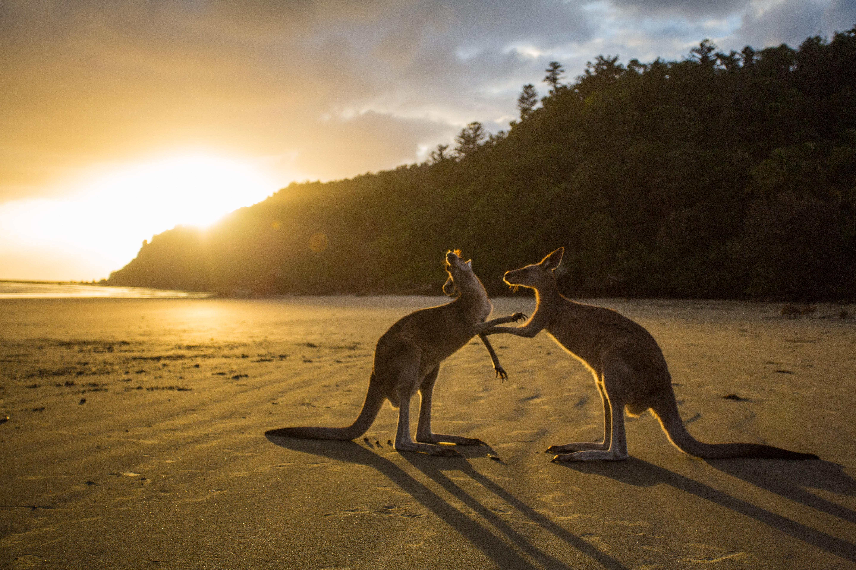 Unique Animals Of Australia