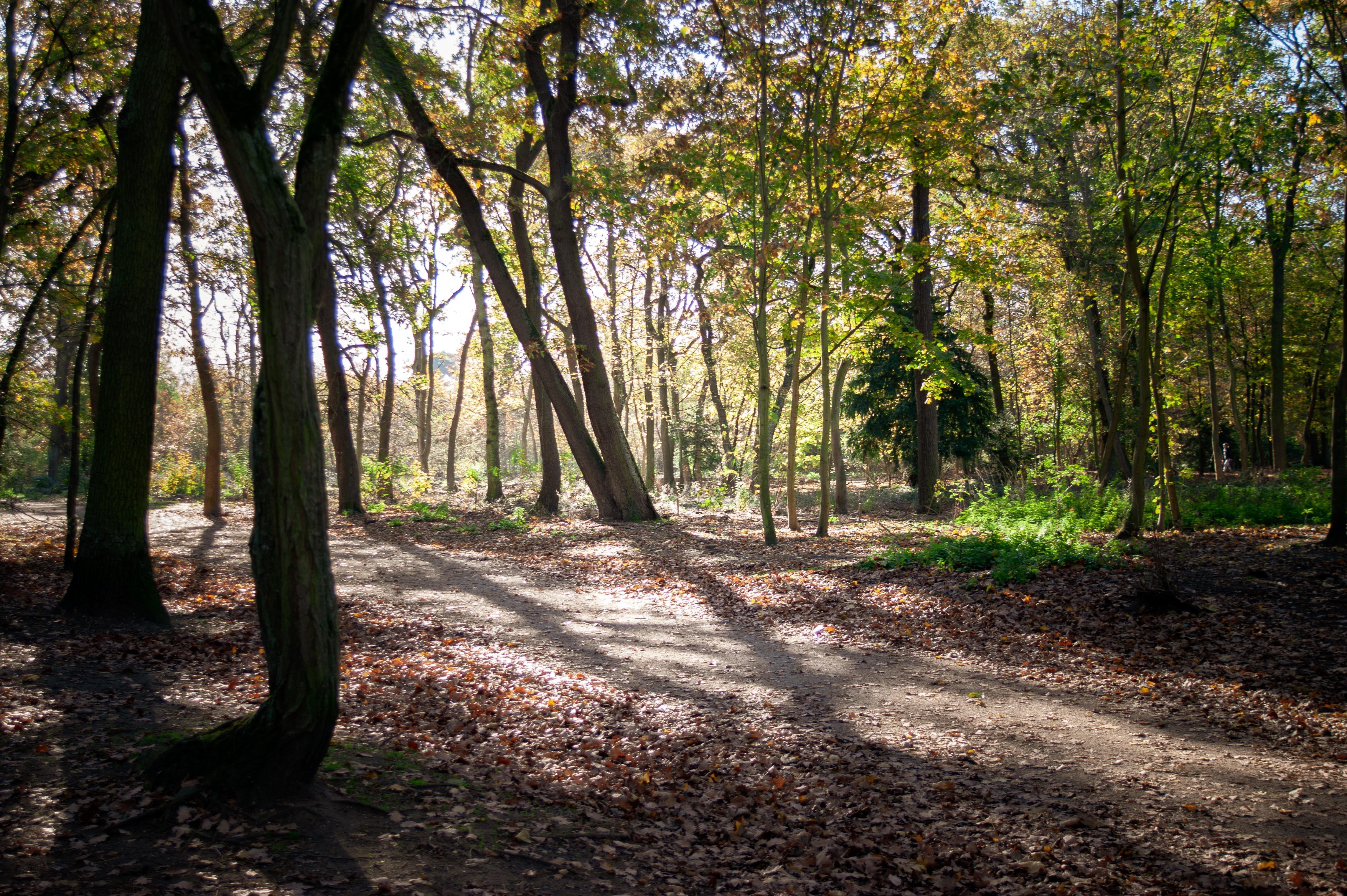Bois de Boulogne, Beautiful park in Paris