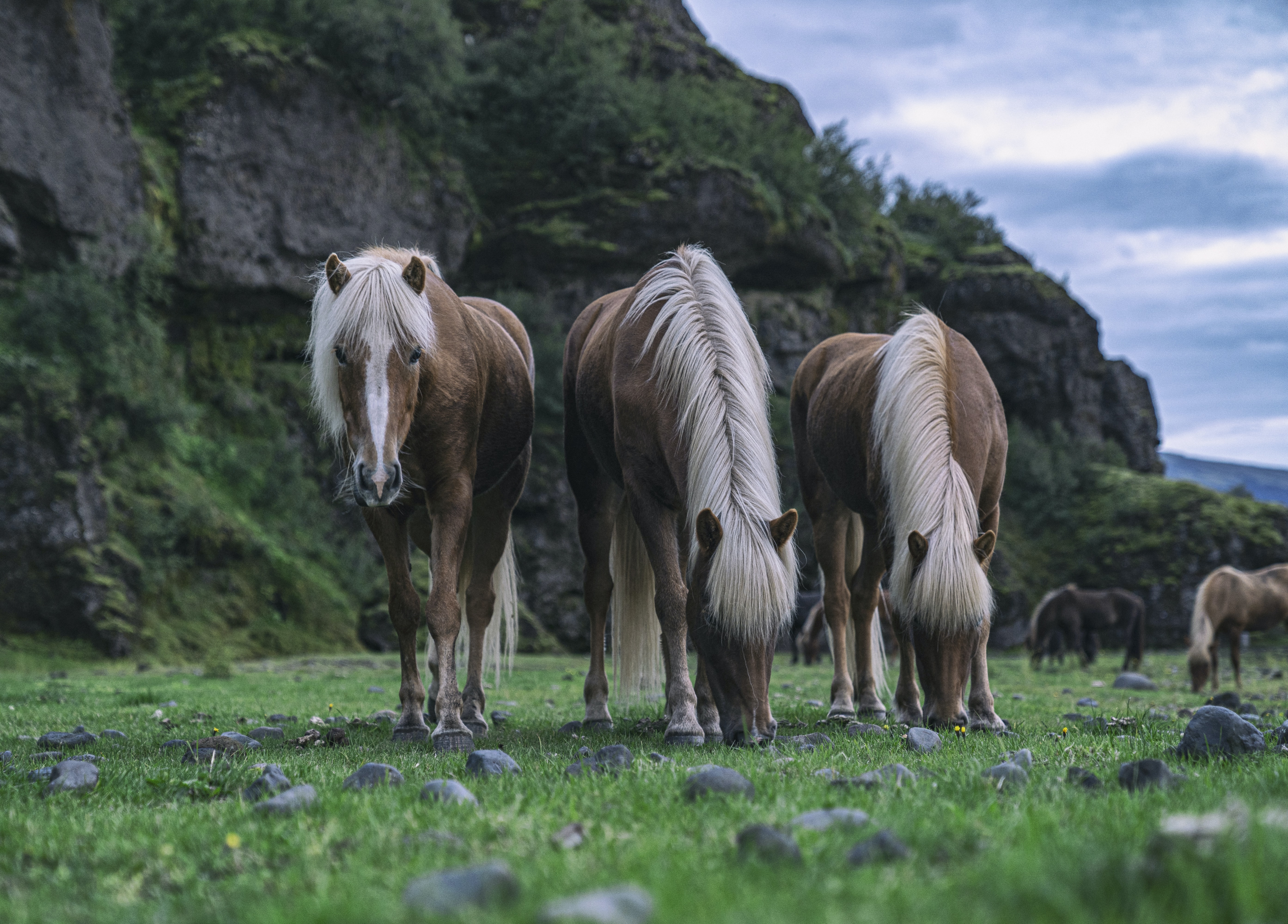 Icelandic Horse Riding, Adventurous Things To Do In Iceland