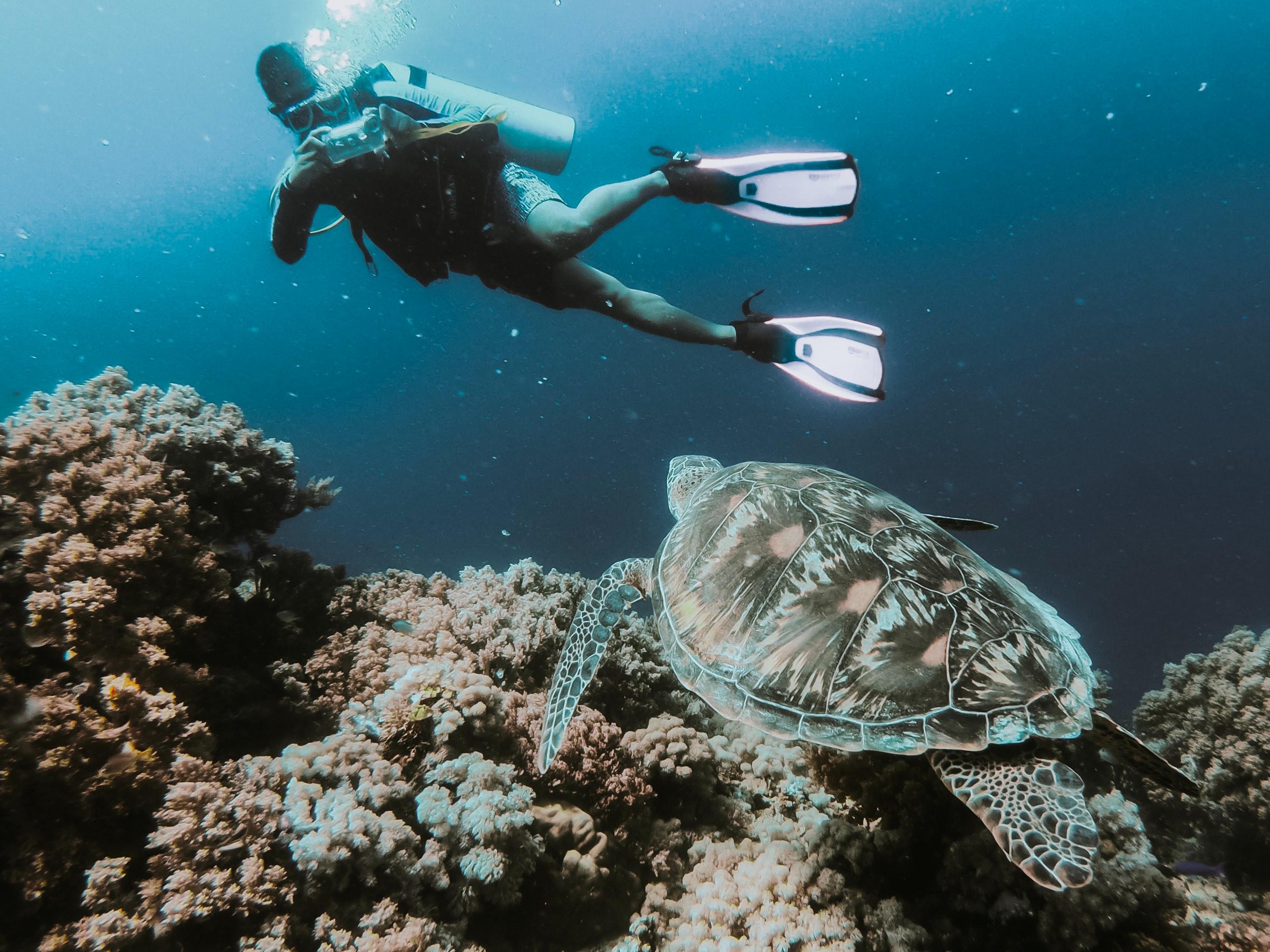 Indulging in Scuba Diving