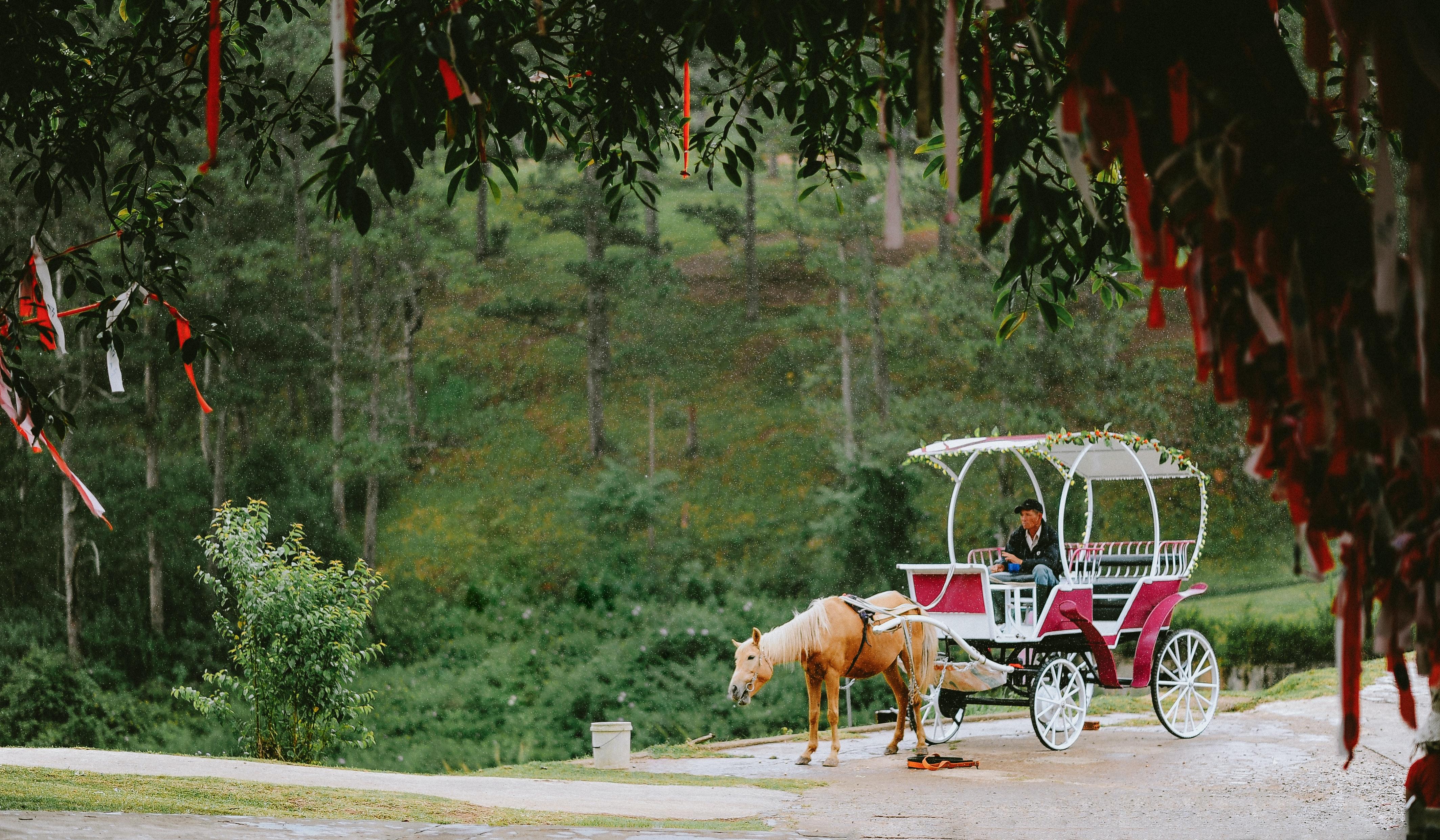 Entour On A Horse Carriage Ride