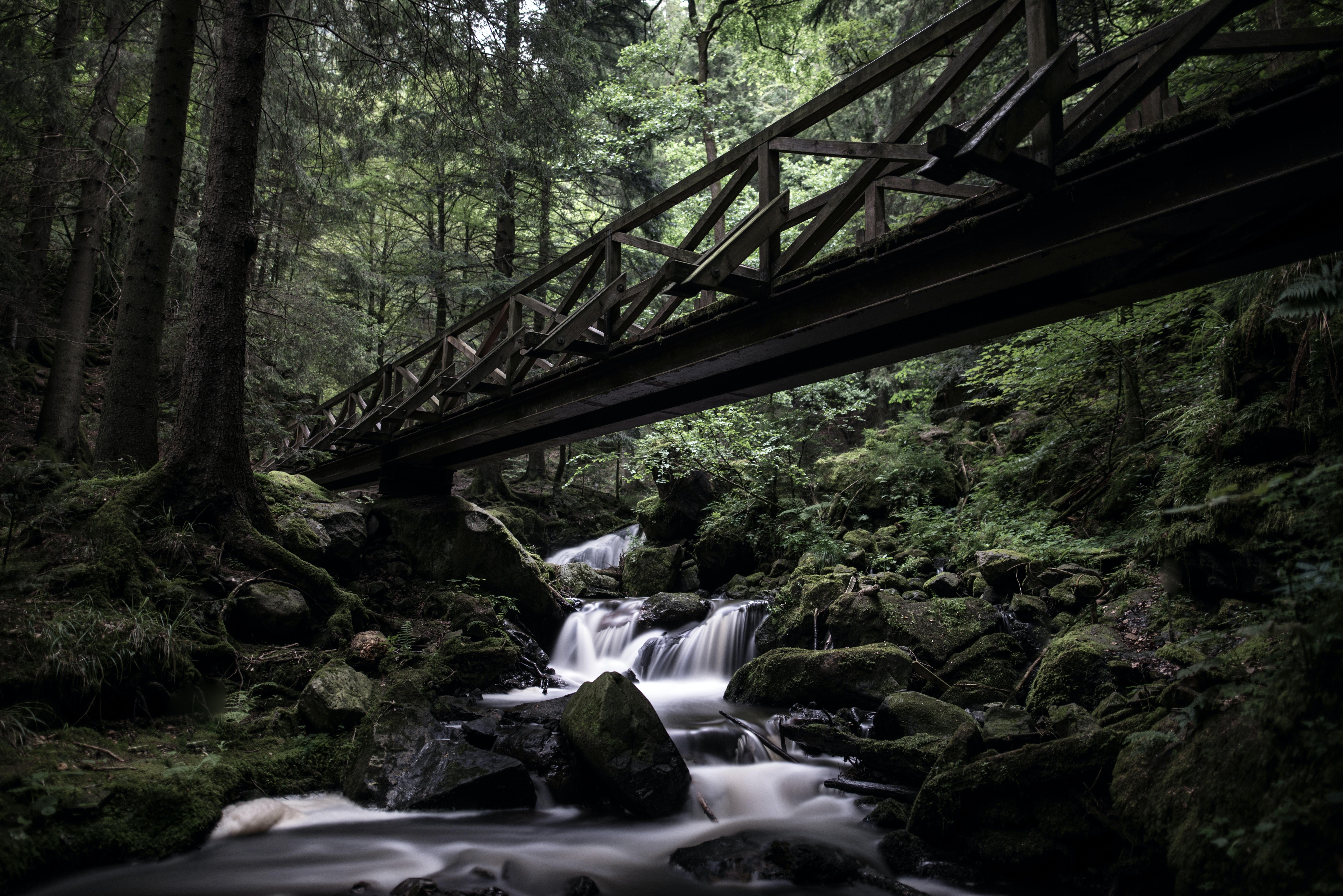 Parque Nacional de la Selva Negra, los mejores parques nacionales de Alemania
