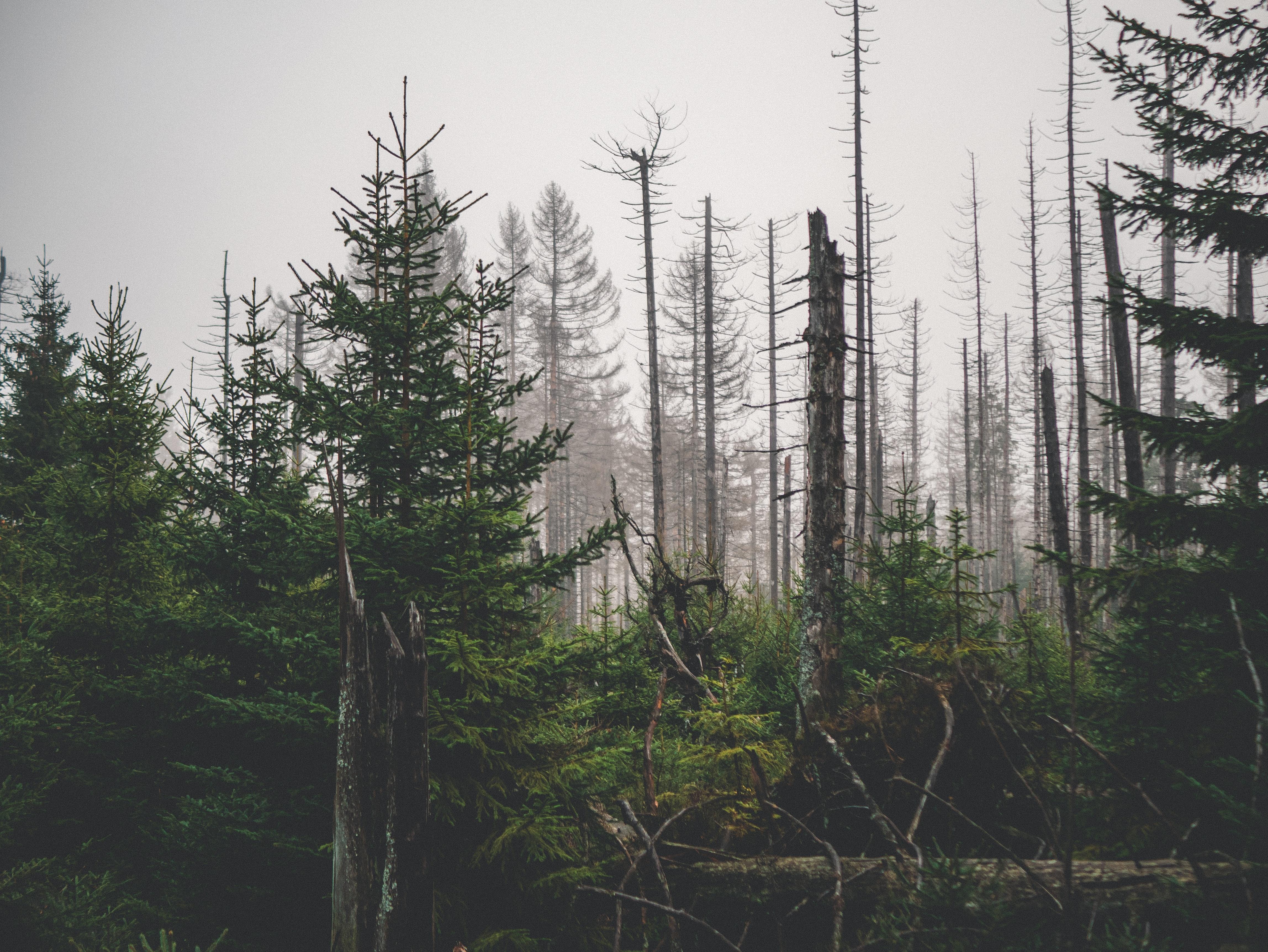 Parque Nacional de Harz