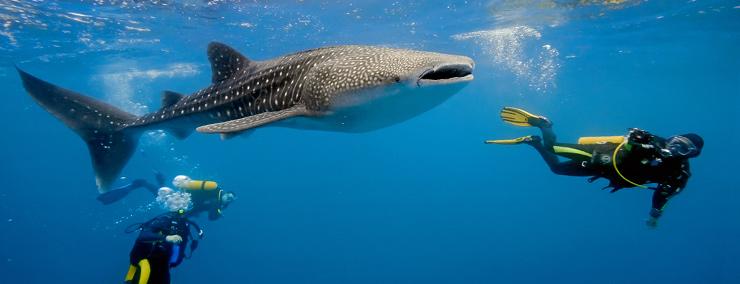 phuket-diving