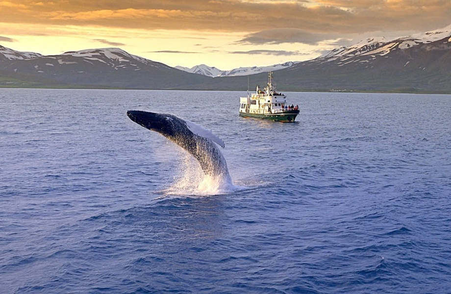 Image Credit : Ambassador Akureyri