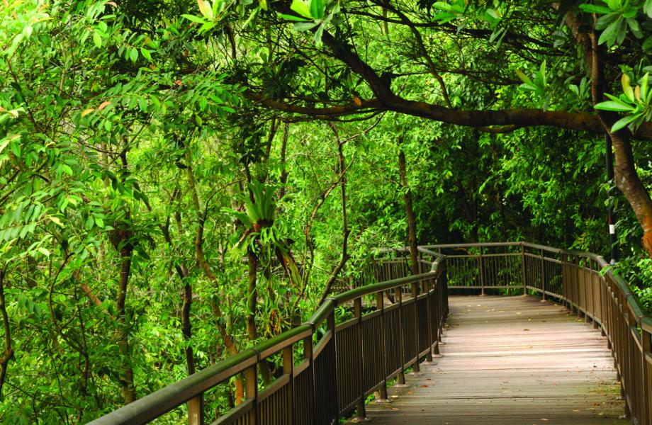 Singapore's nature trail