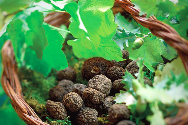 Truffle hunting Umbria Italy
