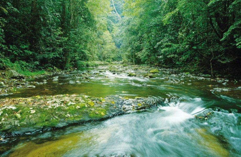 The Cairns rainforest