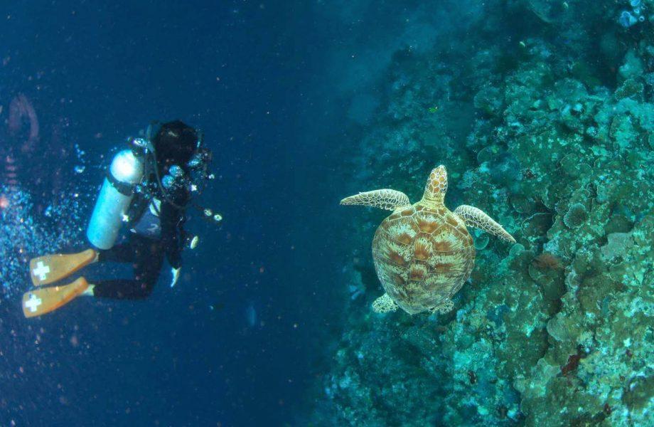 Diving at Sipandan in Mabul island