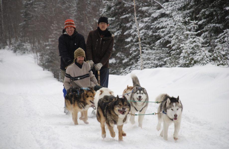 Dog-sledding-iceland