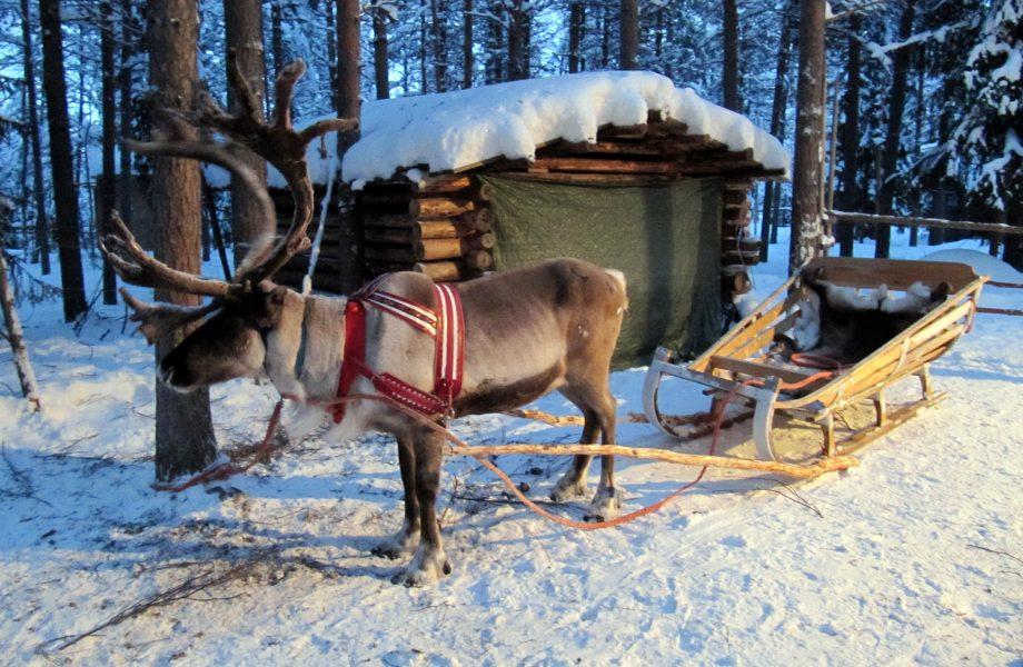 reindeer-sleigh