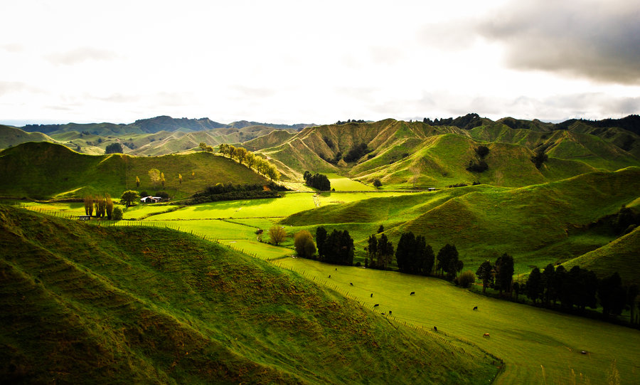 road trip through the forgotten highway in things to do in Auckland