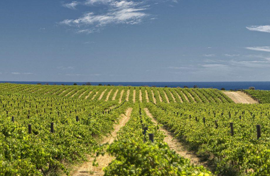 Top 8 Australian Wine Trails