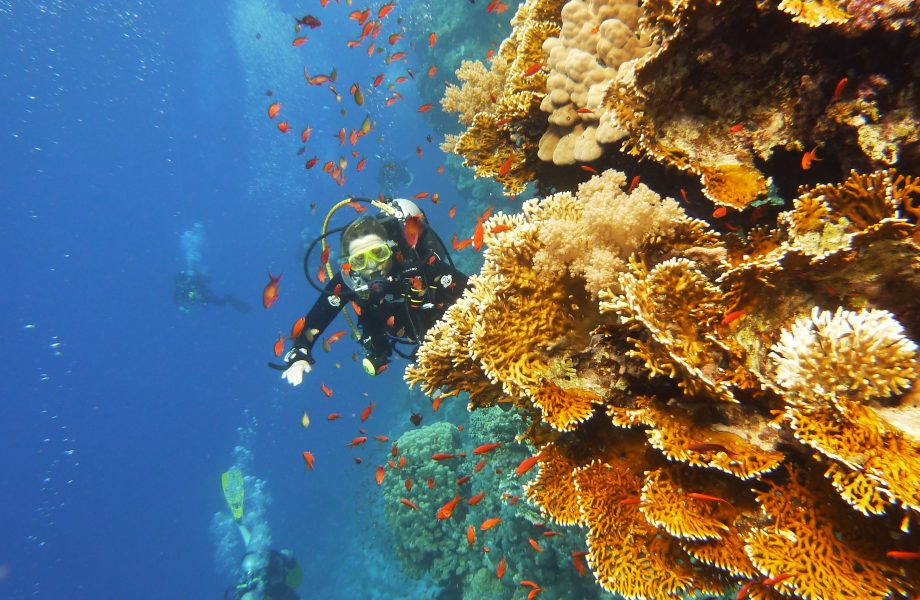 diving-at-red-sea