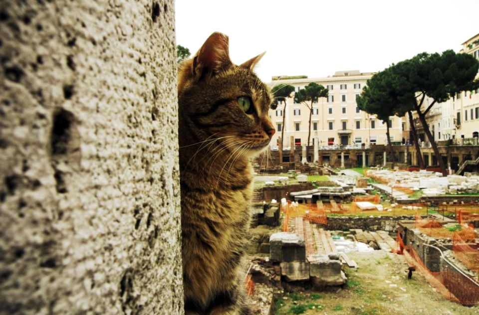 Cat Sanctuary in Guide to Rome