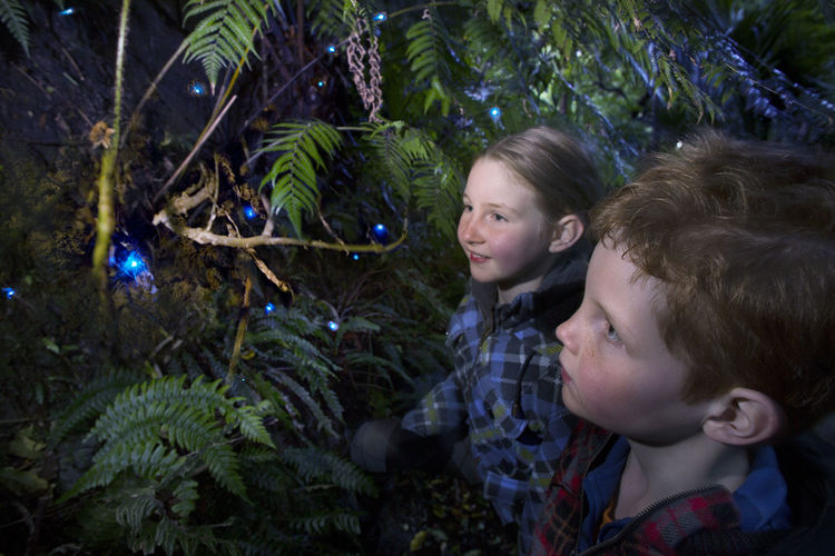 10 Best Places To Spot Glow Worms In New Zealand