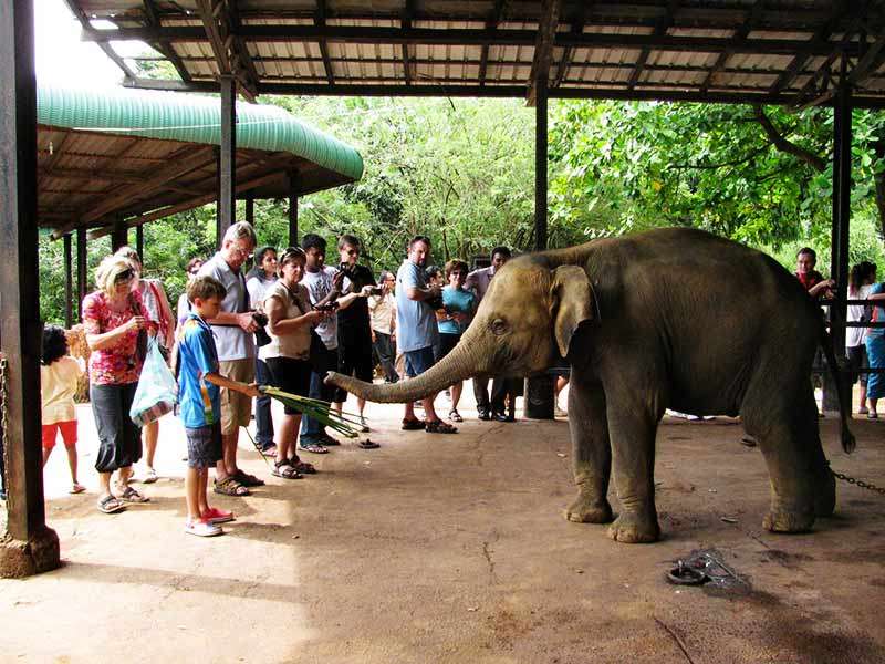 Pinnawala Elephant Sanctuary