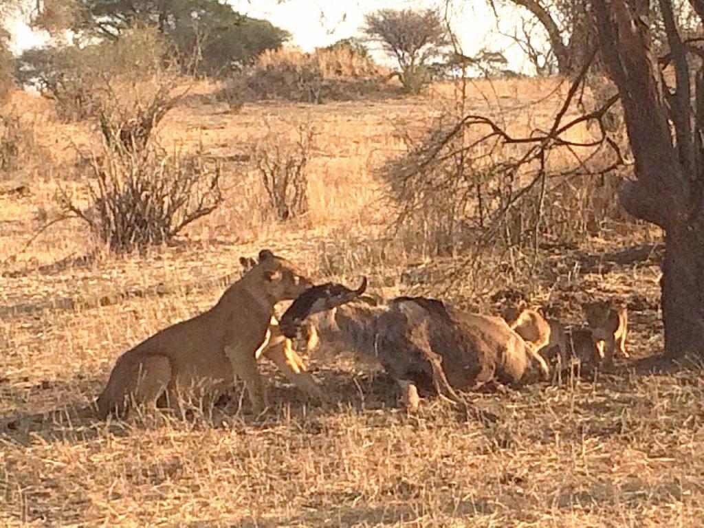 wild Tanzania