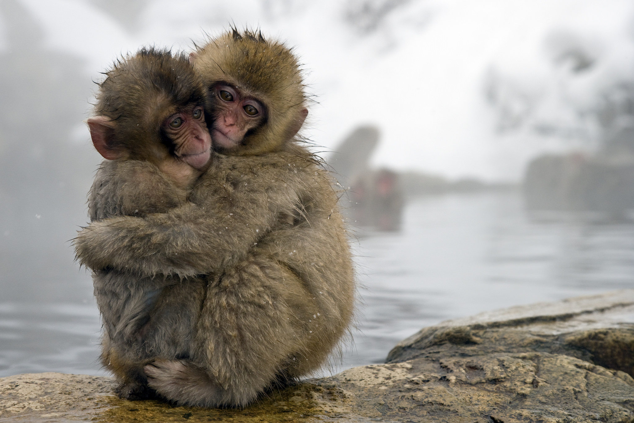 Japan's snow monkeys