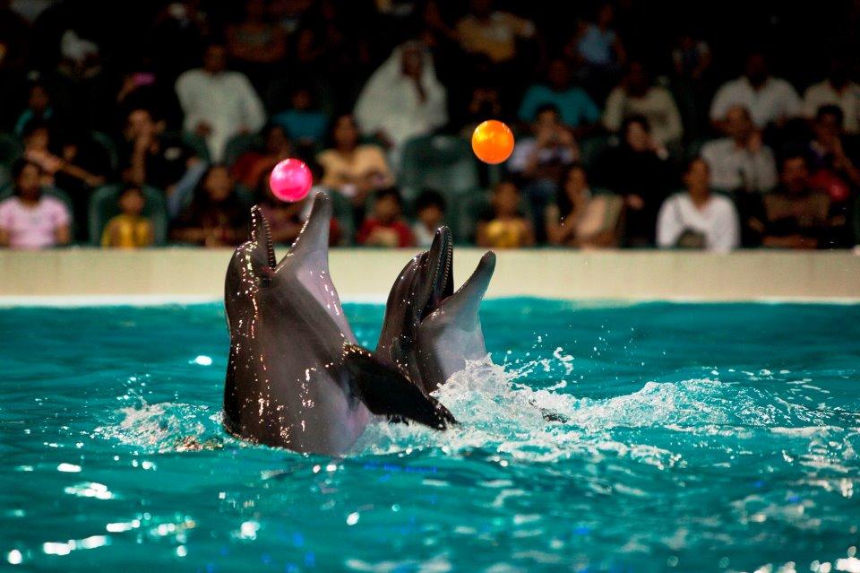 Dubai Dolphinarium