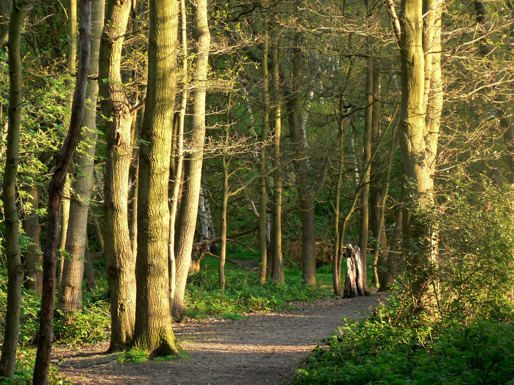 Wimbledon Common,Top free things to do in the UK