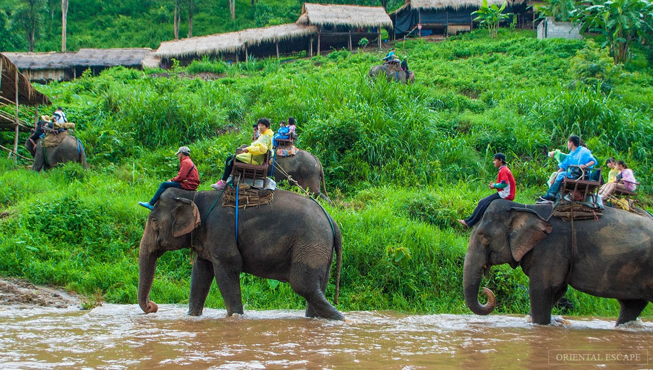 Mahawangchang Elephant Camp,things to do in Thailand
